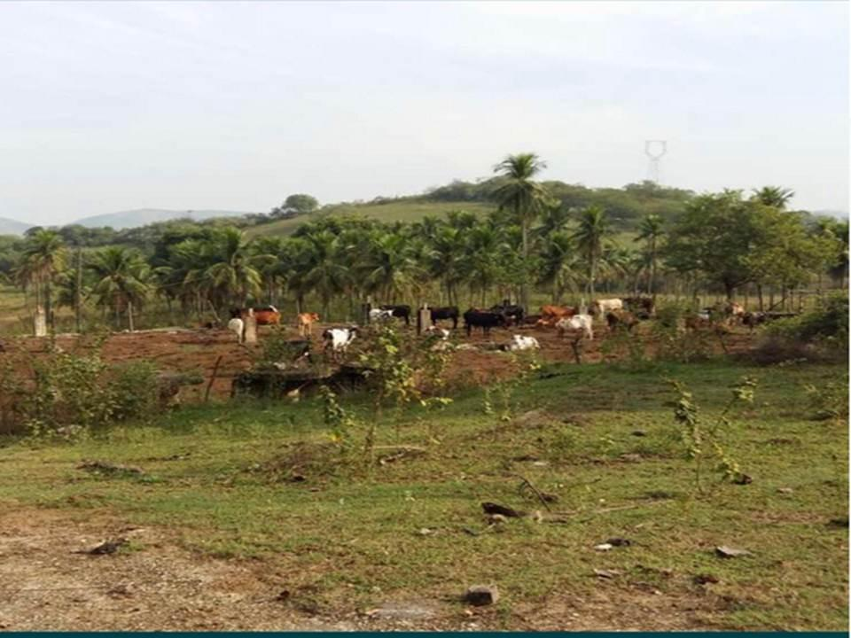 Terreno e Construção para Venda em Nova Iguaçu, Valverde